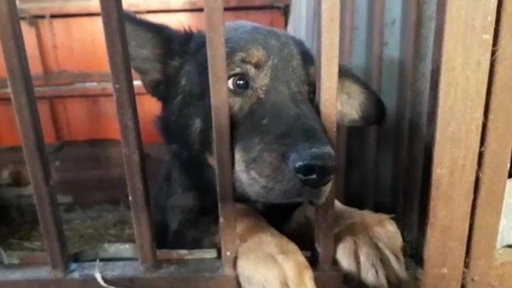 После закрытия скандального «концлагеря» для собак в Артёмовском животные рискуют замерзнуть на улице