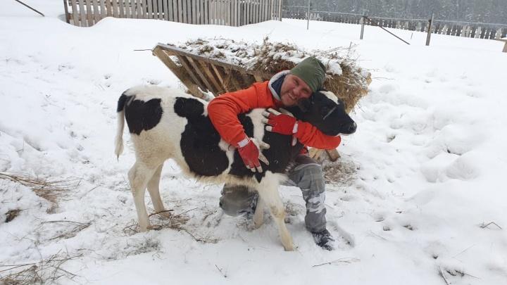 «С мультика всё началось»: бизнесмен из Челябинска уехал в деревню и дрессирует там телят
