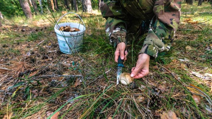 Подберезовики — в Байрамгулово, грузди — в Травниках. Топ-15 грибных мест области