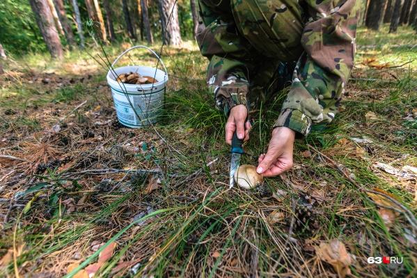 В лесу пригодятся репелленты, спички, вода, средства навигации и заряженный мобильный телефон