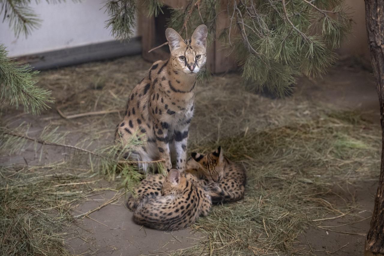 У двух самок родилось по три малыша