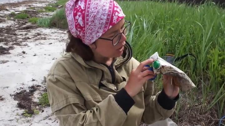 Тетрапаки, кинескоп и бутылка от шампанского: что экоактивистки нашли на пляже Белого моря — видео