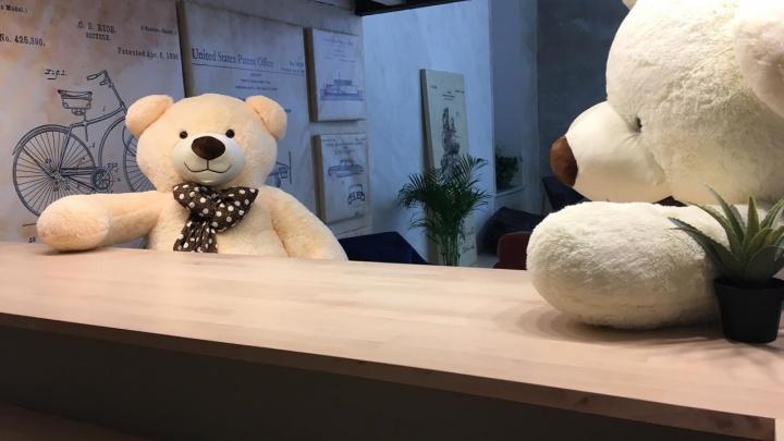 Новосибирец продает плюшевых медведей на миллион рублей в месяц: узнали, как у него это получилось