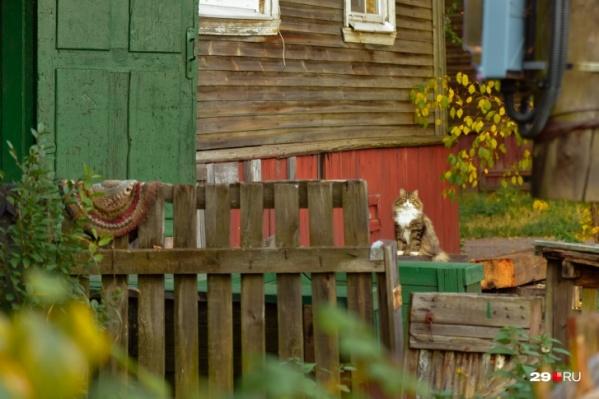 """Посмотрите красочный <a href=""""https://29.ru/text/autumn/69491887/"""" target=""""_blank"""" class=""""_"""">осенний репортаж фотокорреспондента 29.RU</a> с городских улиц"""
