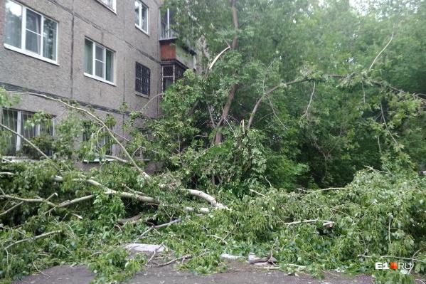 Деревья ломались и падали на автомобили, перекрывали дороги