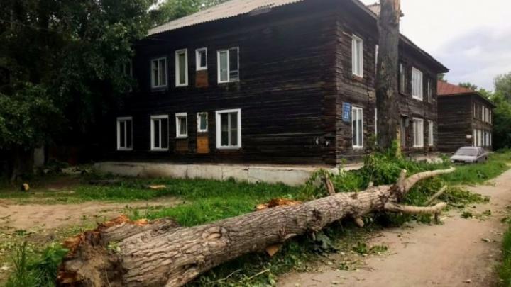 СК возбудил уголовное дело после смерти новосибирца, на которого упала ветка тополя во время урагана