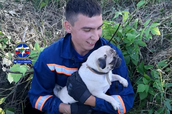 Благодарный пёс на руках и у спасателя
