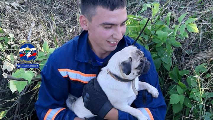 Добрые выходные: новосибирские спасатели достали кошку из труб и вытащили мопса из ямы — фото и видео