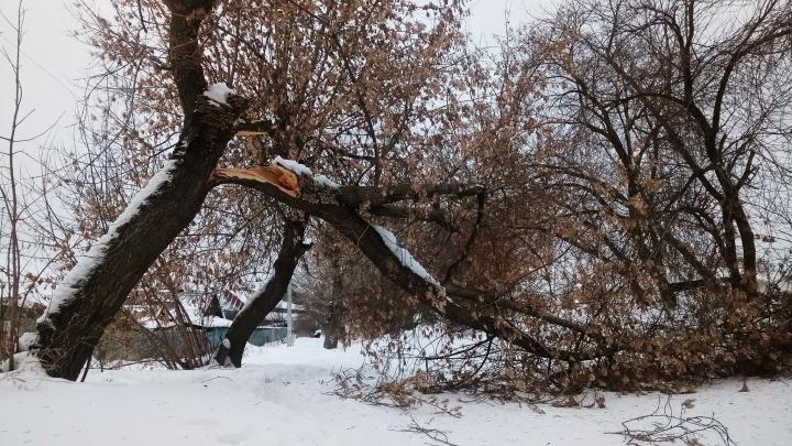 МЧС предупредило новосибирцев о сильном ветре до 20 м/с