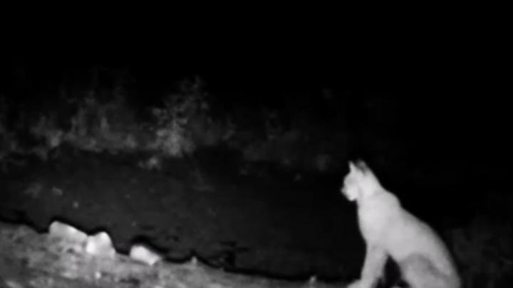 Рысь, лось и заяц: смотрите, как подглядывают за животными в нацпарке Башкирии