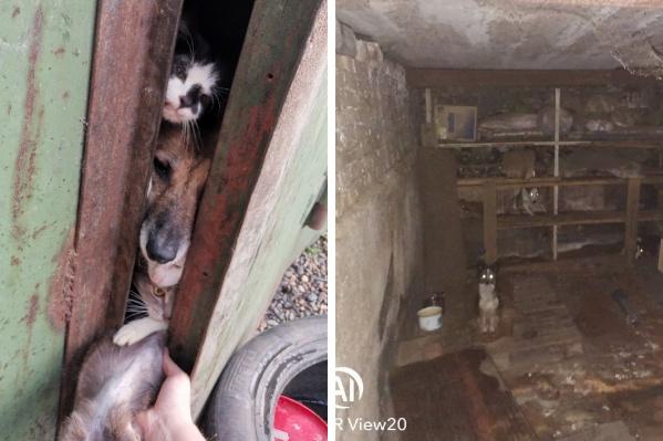Животные жили в гараже в темноте и в грязи