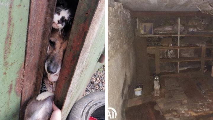 Волонтёры спасли 15 кошек и собак, запертых в гараже у «собирательницы» животных