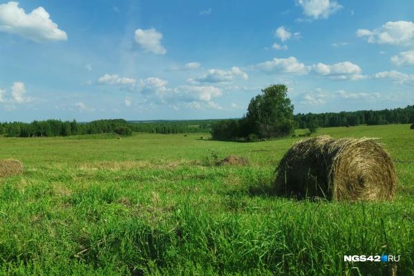 По словам синоптиков, сейчас лето в Кузбассе длится на три недели дольше