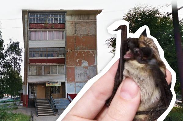 В Тобольске летучие мыши поселились на балконе одной из многоэтажек