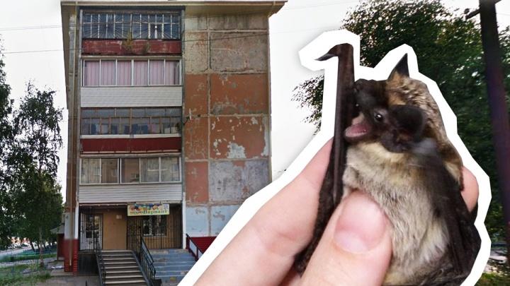 Жители Тобольска страдают от нашествия летучих мышей