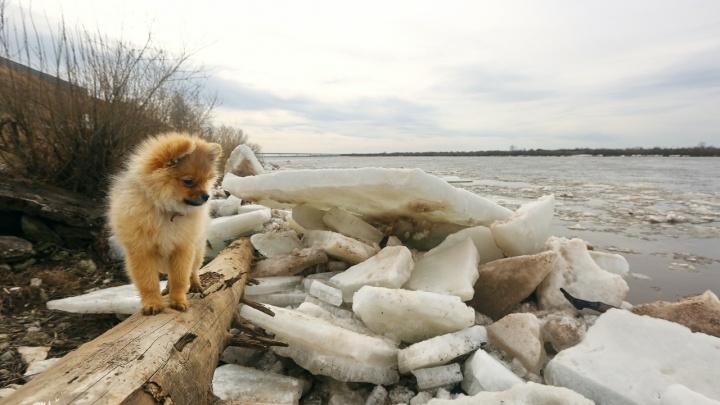Для тех, кто дома: смотрим, как красиво с Малой Северной Двины уходит лёд. Фото