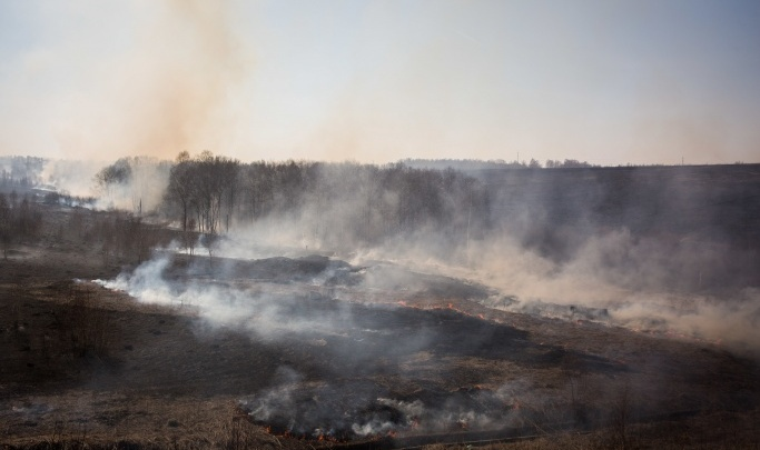Новосибирская область оказалась первой в России по ландшафтным пожарам. Сгорело 36 «Новосибирсков»