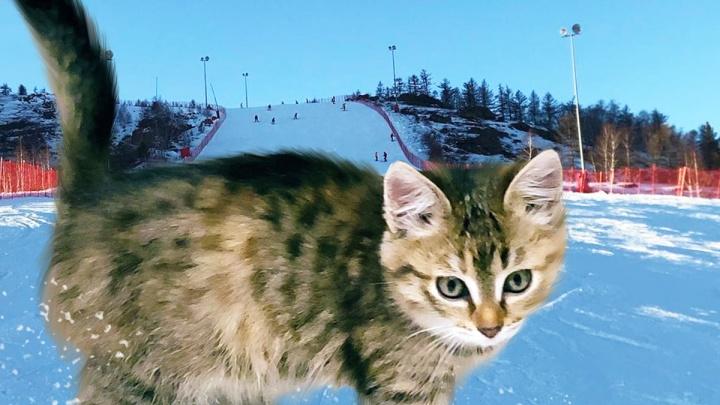 «Теперь носит гордое имя Бася»: тюменцы спасли бездомного котенка, найденного на горнолыжном курорте