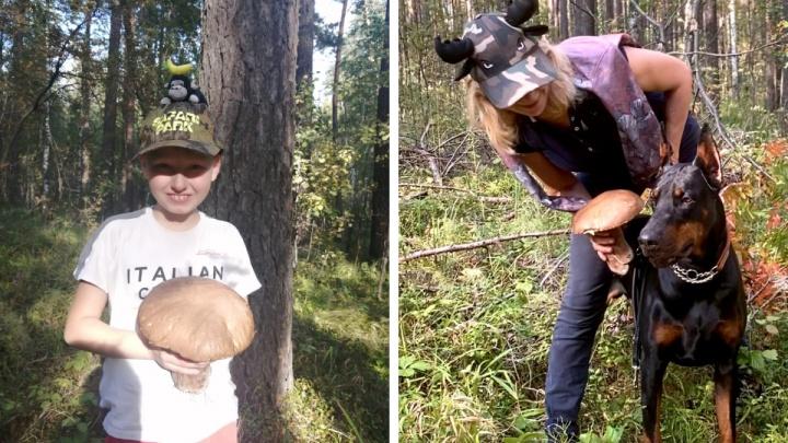 «Размером с голову взрослого добермана»: новосибирцы собирают гигантские белые грибы (смотрим на их находки)