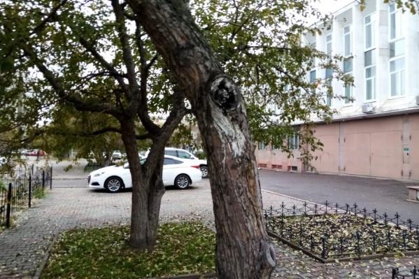 Деревья высохли и были поломаны ветром