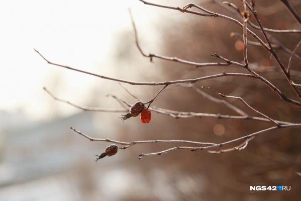 Декабрь начнется с изморози и морозов