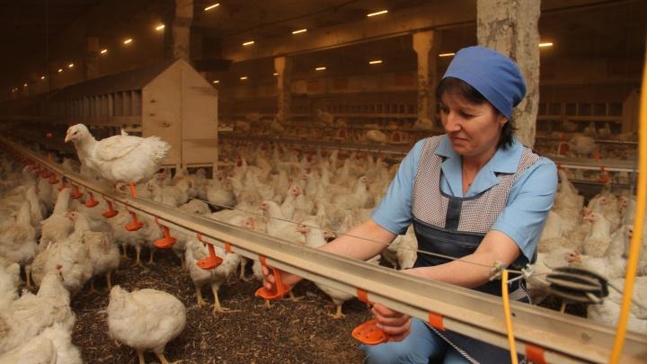 Аналитики подсчитали среднюю зарплату в Башкирии