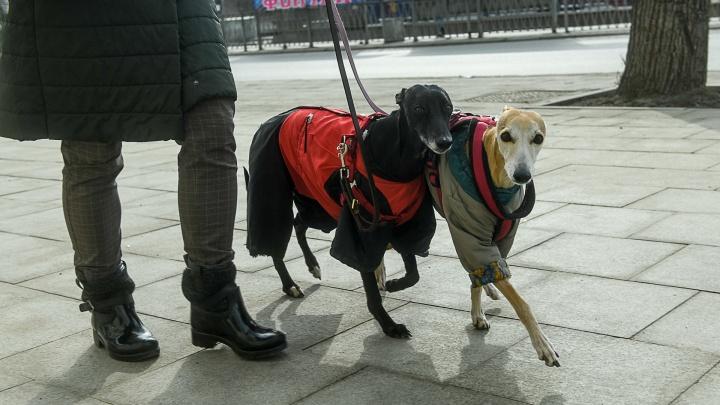 С собакой можно. 15 фотографий песиков, спасающих екатеринбуржцев от заточения