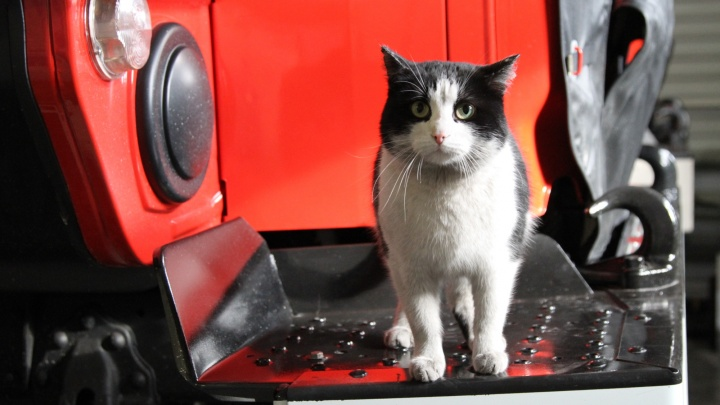 Пожарные поздравили своего кота по имени Гидрант с Днем кошек