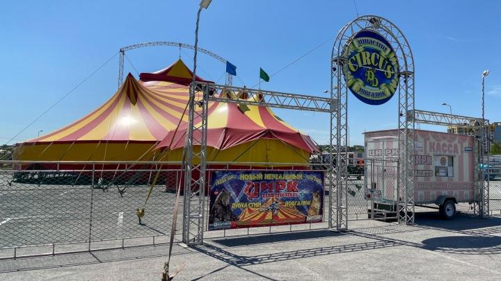 «Мы все же надеемся увидеть вас в цирке»: волгоградцам покажут цирковое шоу онлайн