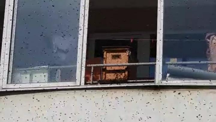 «Смотрю, что-то летает, жужжит»: на Эльмаше улей с пчелами поставили прямо на балконе