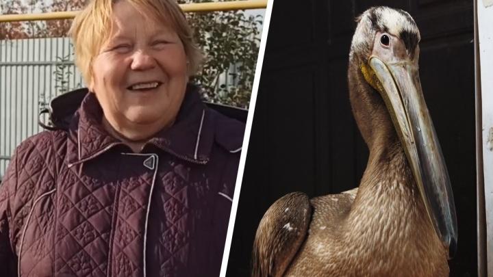 Назвали Аркашей: в деревне под Самарой бабушка спасла пеликана