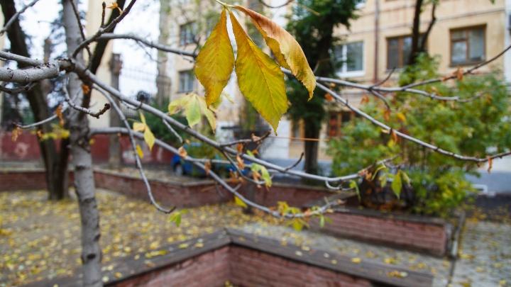 Сильный ветер и осенняя прохлада: рассказываем о погоде в Волгограде в ближайшие дни