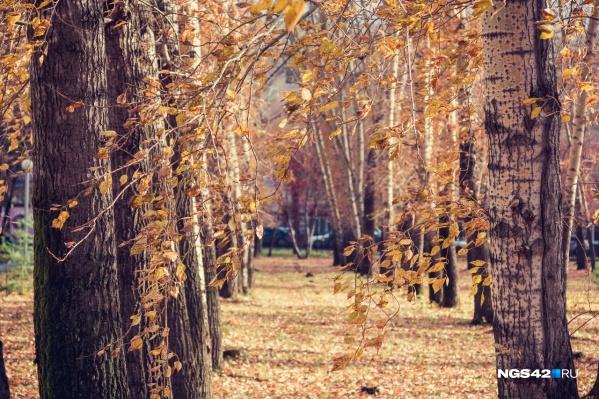 В ближайшие 10 дней в Кемеровской области будет средняя температура +11... +14 градусов