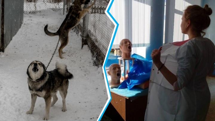 Будущая медсестра из Сибири меняет свои откровенные фото на помощь животным — она объяснила, почему