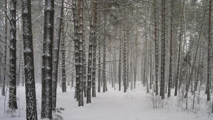 Почему в Новосибирск не пришли обещанные морозы? Синоптики дали новый прогноз
