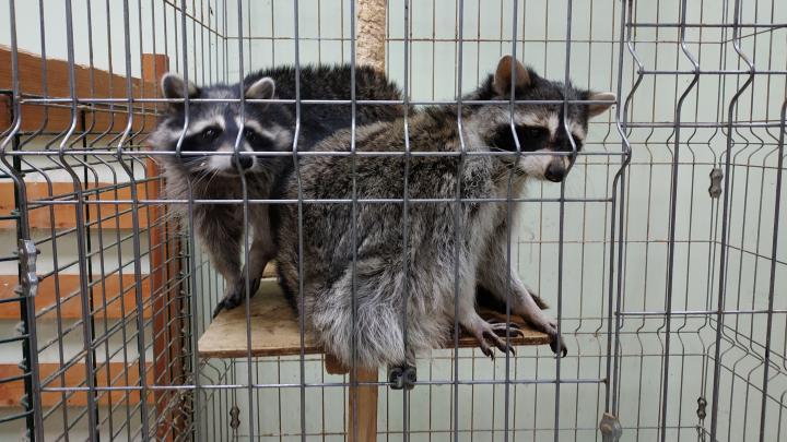 Жители Архангельска собрали запас продуктов для животных зоопарка
