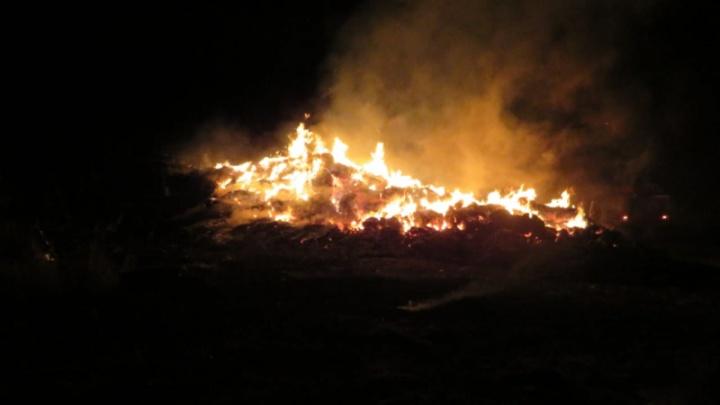 «Едва успела вывести скот»: волгоградские полицейские по горячим следам задержали поджигателя