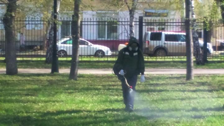 Парки и набережные Самары очистят от клещей и крыс