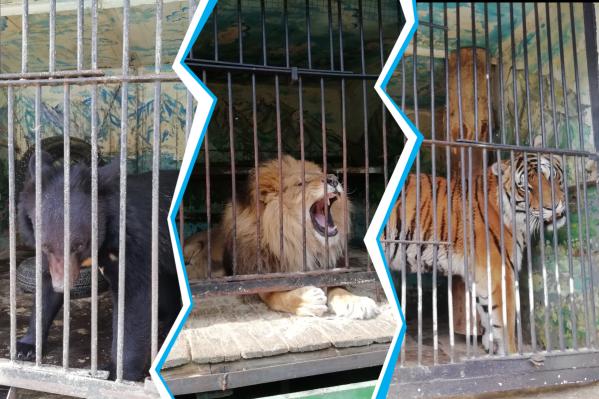 В заложниках ситуации оказались 16 видов животных