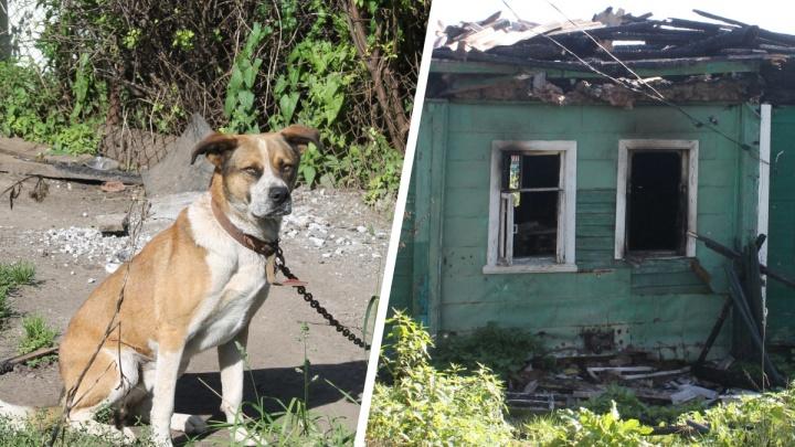 «Все миски пустые - ни еды, ни воды»: в Ярославле на пепелище оставили привязанную на цепи собаку