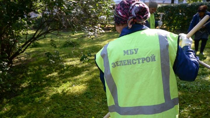 В Екатеринбурге собираются запретить варварскую обрезку деревьев, при которой удаляется вся крона