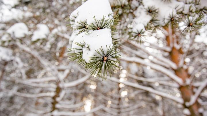 Погода изменится: в Ярославле прогнозируют возвращение зимы и «барическую пилу»