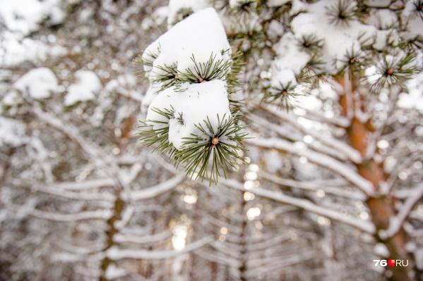 Зима вернется в Ярославль в конце недели
