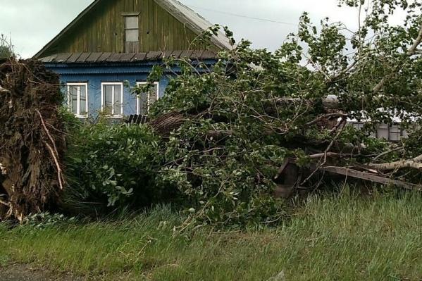 В Асбестовском районе деревья вырывало с корнем