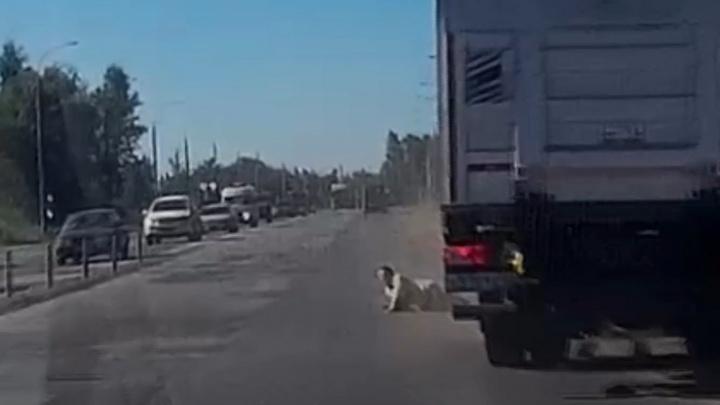 Бросилась под колёса: в Ярославле фура чуть не задавила пенсионерку. Видео