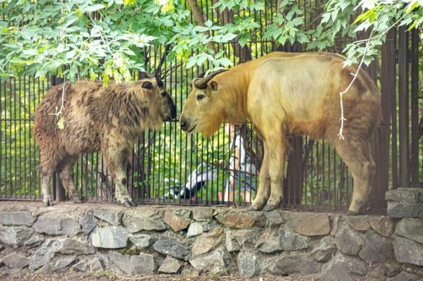 В зоопарк привезли самца и самку