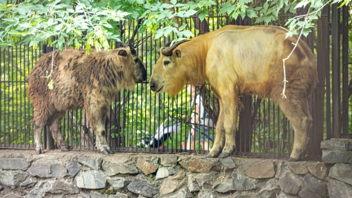 В новосибирский зоопарк привезли животных, которых нет больше нигде в России. Смотрим фото