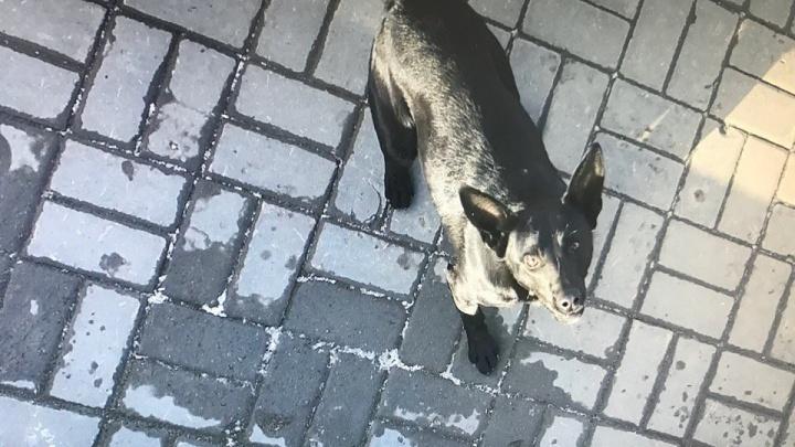 «Врачи назвали меня еще одной недоеденной»: нижегородку покусала стая собак в Волгограде