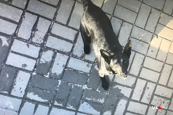 По мнению горожанки, стаи крупных псов захватили весь Волгоград