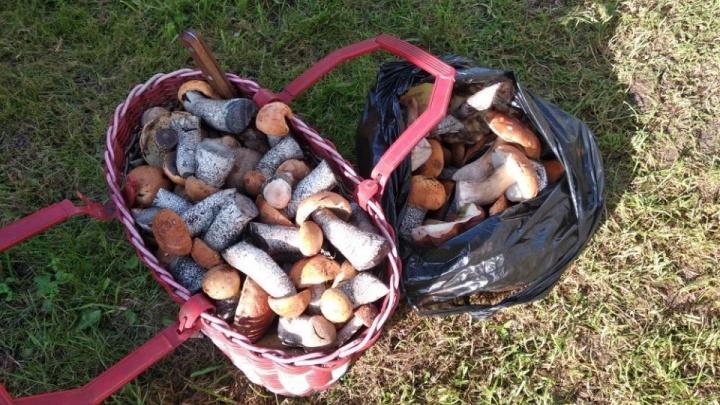 Нельзя собирать с опушки или во рвах: спасатели дали нижегородцам советы по сбору грибов